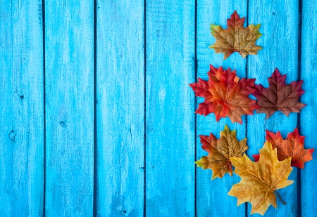 iStock_000045065544_Small_leaves