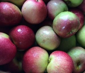 Apples_blog post